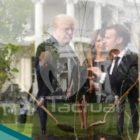 Árbol de la amistad entre Francia y EE.UU. muere