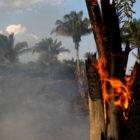 Surgen más pronunciamientos por incendios en la Amazonía