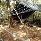Campamentos terroristas se yerguen contra la paz de Venezuela