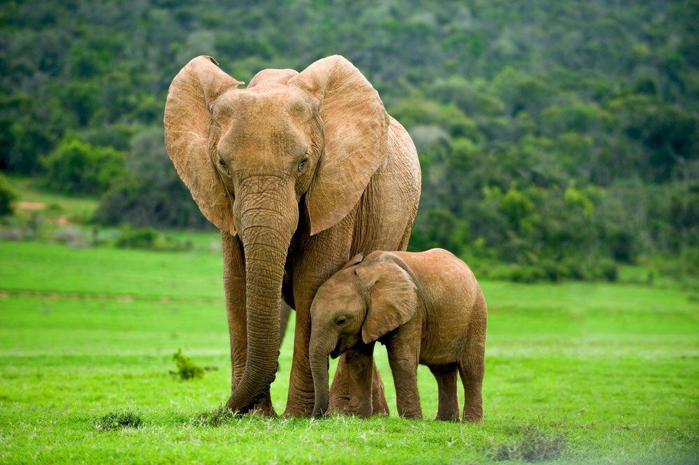 Especies amenazadas tendrán su defensa en Ginebra