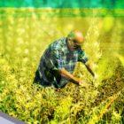 Ecologistas franceses se alzan contra los pesticidas