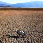 Sequía severa convierte al centro chileno en fosa común de ganado