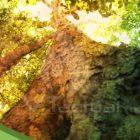 Súper árboles de la Amazonía: una esperanza para la humanidad
