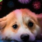 Tips para que tu mascota no sufra con los pirotécnicos