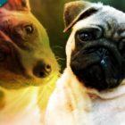 Perros también pueden entender a desconocidos