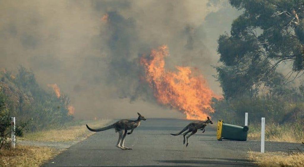 Incendios en el sur de Australia se cobran dos nuevas vidas