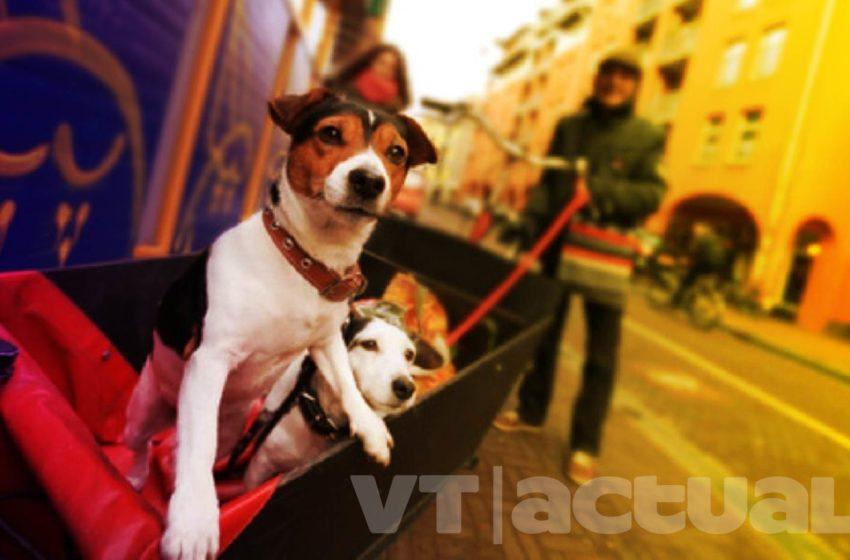 #VTmascotas El perro: una maravillosa creación del ser humano