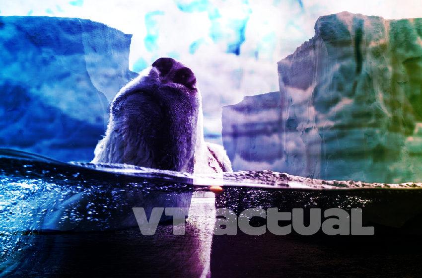 #VainaVerdeVT Deshielo del Ártico: la lucha por la ruta del ecocidio