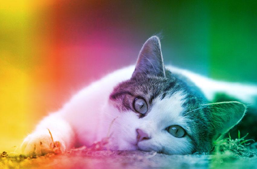 #VTmascotas Mitos y verdades sobre los gatos