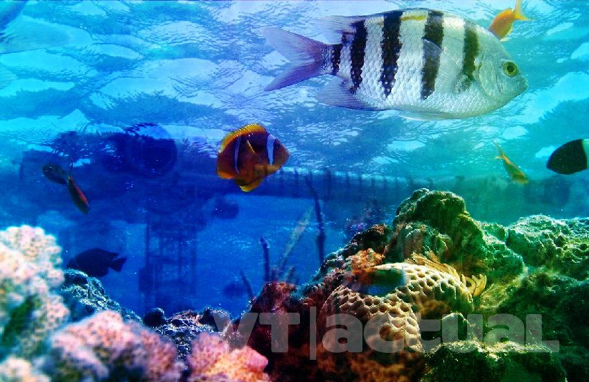 #VainaVerdeVT El engaño de la Minería Oceánica y cómo daña al ambiente