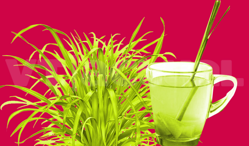 Malojillo y otras hierbas para frenar los achaques