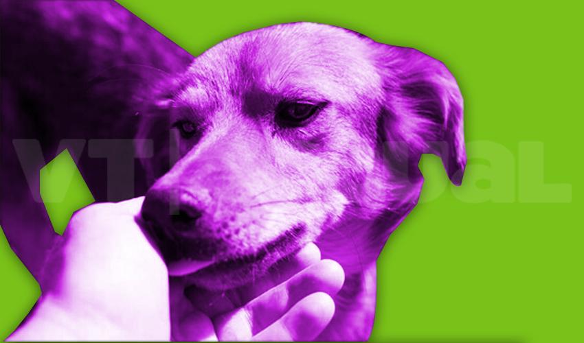 #VTmascotas ¿Cómo ayudar a un animal comunitario en tiempos de cuarentena?