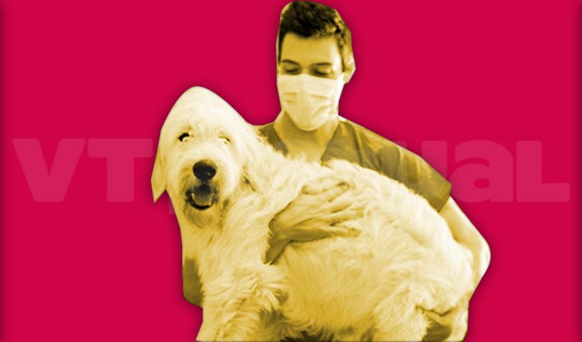#VTmascotas En Venezuela los animales tienen protección a pesar de la Cuarentena