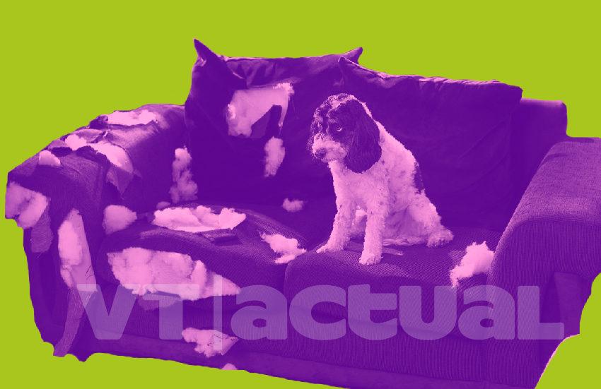 #VTmascotas Actividades que puedes hacer en casa con tu perro durante la cuarentena