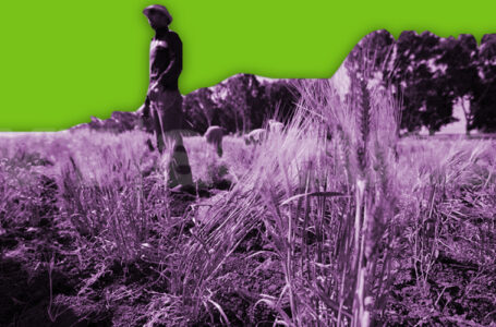 Washington destruyó la economía de pequeños agricultores sirios / Foto: VTactual.com
