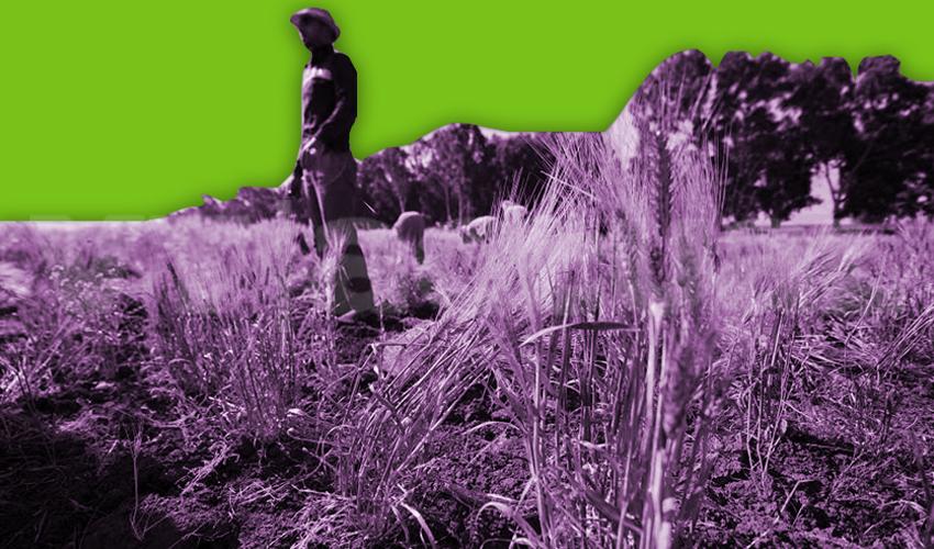 Washington destruyó la economía de pequeños agricultores sirios