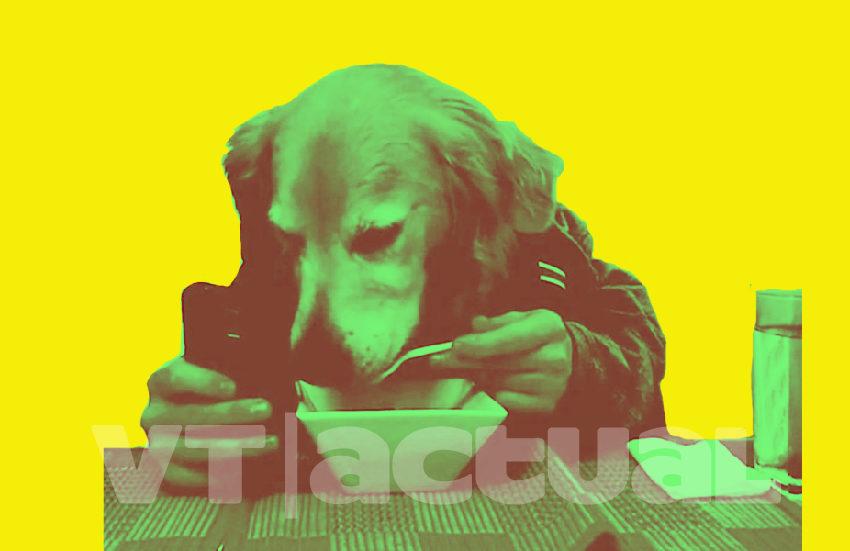 #VTmascotas 7 memes divertidos de animales para sobrellevar la cuarentena
