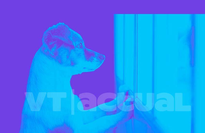 #VTmascotas En aislamiento: señales de que mi perro está estresado
