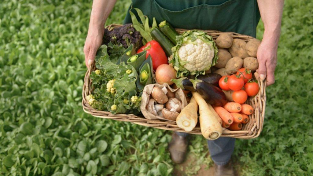 producción de alimentos