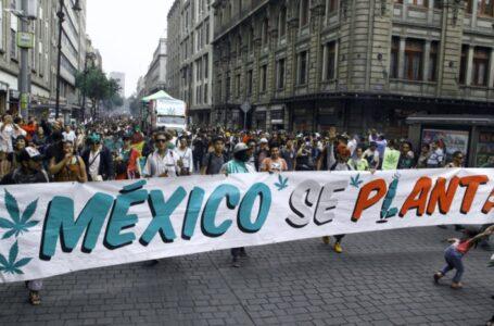 Senado aprueba ley para legalizar la marihuana en México