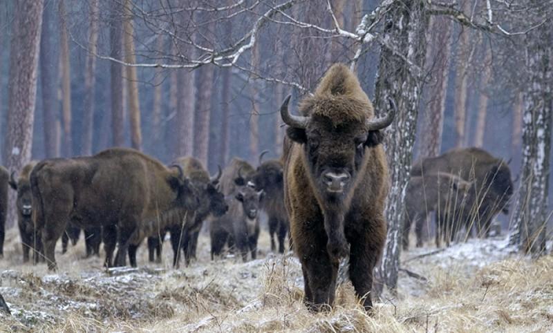 Extinción: El éxito de la conservación frente a 31 especies perdidas