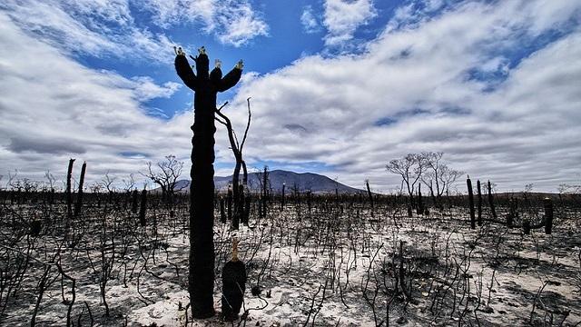 Australia se salva del Coronavirus pero no del fuego