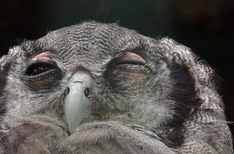 Despierto de noche como una Lechuza: ¿Insomnio o tu móvil?